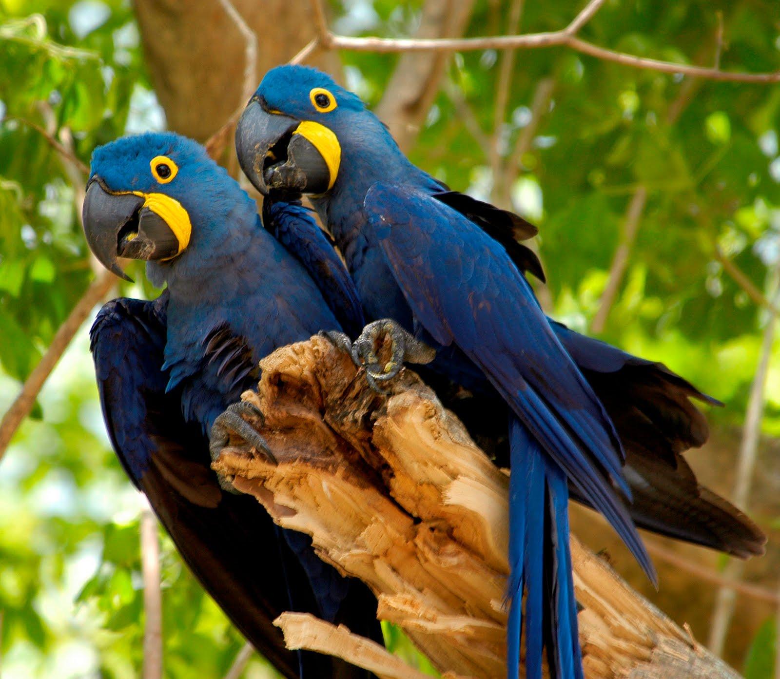 Fauna Pantanal